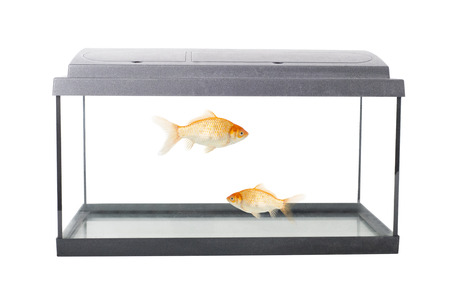 isolated empty fish tank and goldfish