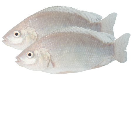 Tilapia on white with clipping path Imagens - 40920290