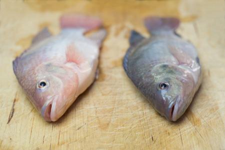 Tilapia Fish freshly harvested in urban fish farm Imagens - 44498370