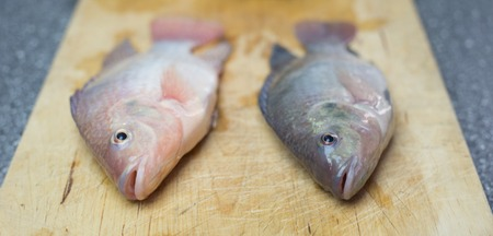Tilapia Fish for preperation in private kittchen, tasty seafood dinner Imagens - 44498374