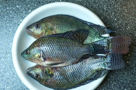 Freshly caught tilapia fish from local aquaculture on white plate ready for your cooking recipe