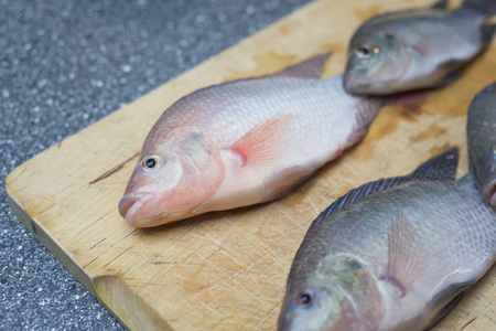 preperation: Tilapia Fish for preperation in seafood restaurant