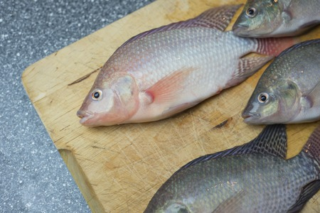 Time to eat some tasty fish and get some protein from freshly cought seafood, tilapia aquaponics