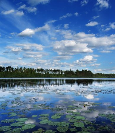 admire: On the  lake coast grow pines, on foreground -  round sheets and flowers from water lilies Stock Photo