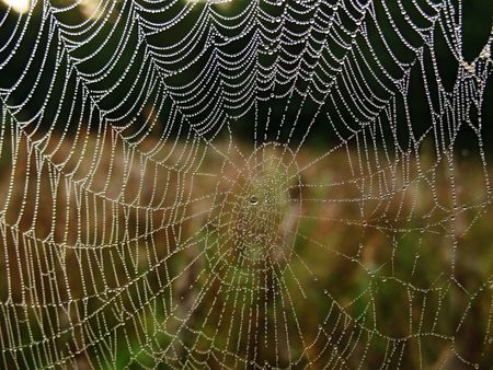 dewdrops: Sunrize - a web is covered dewdrops. Stock Photo