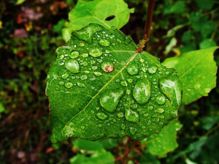 rain ended and on green sheet remained water drops. photo