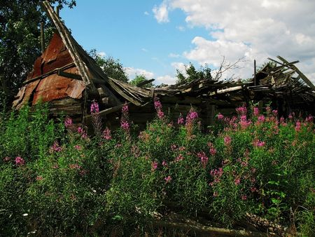 before house grow pink flowerses, roof of the building collapsed photo