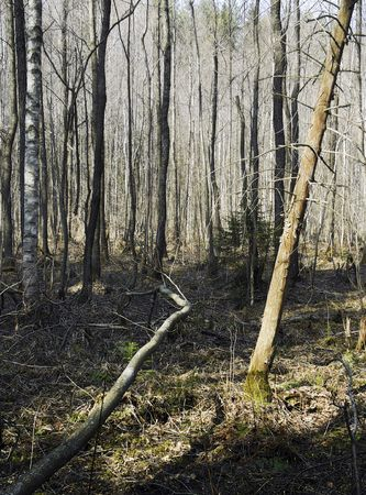 spring - sunny day - wildness forest Stock Photo - 2427919