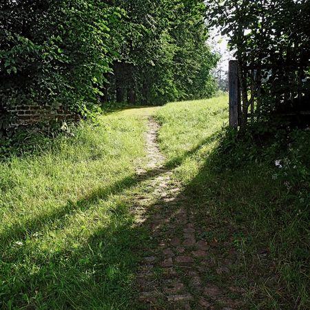 small brick road illuminate sun rays photo