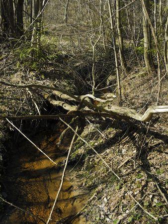 spring creek and mounted horseshoe under sun rays photo