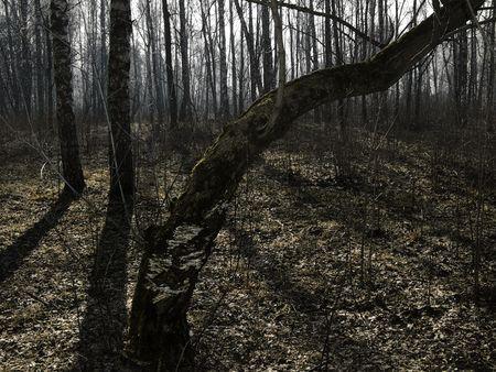 spring wood under sunbeams - trees, shadows, dry foliage photo