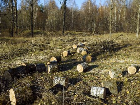 lies down: on glade lies cut stem a tree - a firewood for stove
