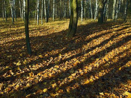 interleaved: on autumn yellow foliage  interleaved shadows and illuminate areas Stock Photo
