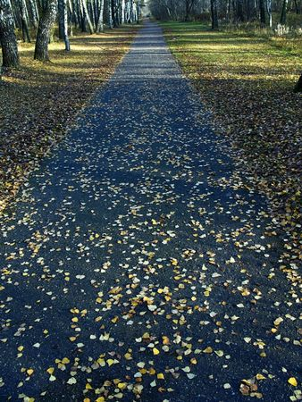 admire: autumn park - on road is yellow sheets of the birches