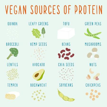 Vegan eiwitbronnen. Vector EPS-10 hand getrokken illustratie
