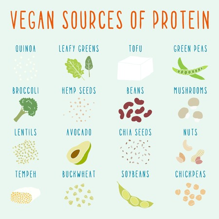 protein source: Vegan sources of protein. Vector EPS 10 hand drawn illustration