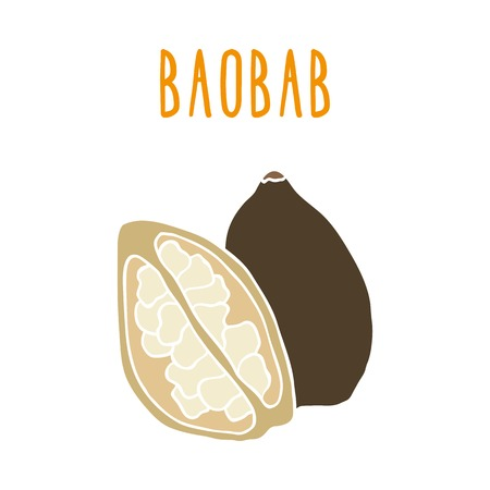 Baobab. Vector hand drawn illustration