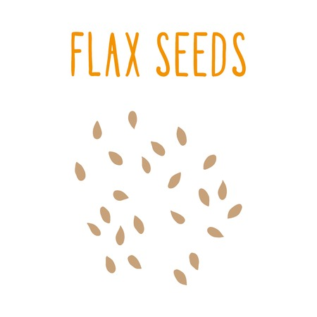 illsutration: Flax seeds. Vector hand drawn illsutration. Illustration