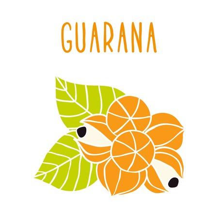 black berry: Guarana. Vector hand drawn illustration.