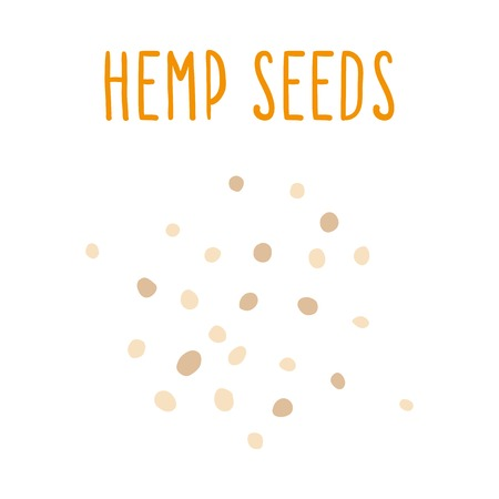 Hemp seeds. Vector hand drawn illustration.