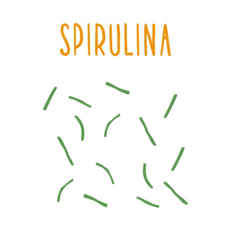 Spirulina. Vector hand drawn illustration.