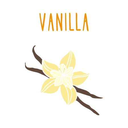 Vanilla beans. Vector hand drawn illustration.