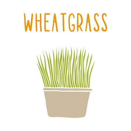 Wheatgrass. Vector hand drawn illustration.
