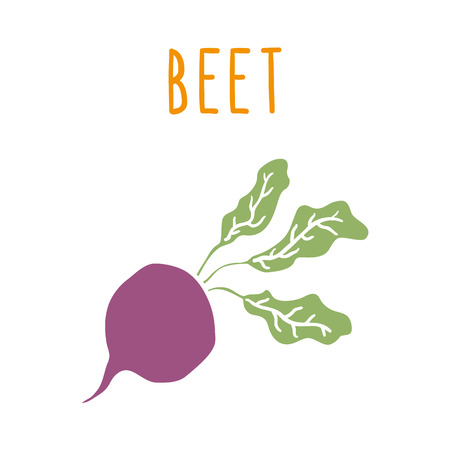 Beet root isolated on white. Hand drawn vector illustration Ilustração