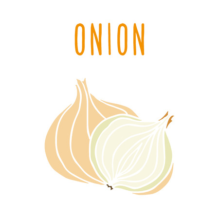 onion isolated: Onion isolated on white. Vector hand drawn illustration Illustration