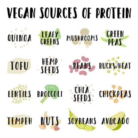 Vegan sources of protein. Vector hand drawn info illustration