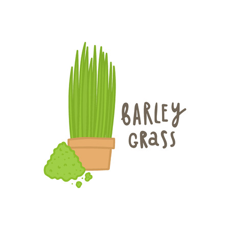 grass blades: Barley grass superfood. Vector hand drawn illustration Illustration