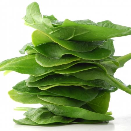 spinaci: Baby Spinach studio isolato su sfondo bianco Archivio Fotografico