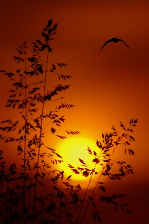 Sunset with silhouette of grass and bird in distance