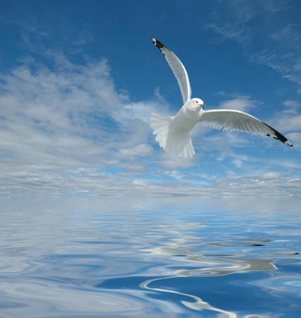 gaviota: Oc�ano, con vistas muy bonita cielo nublado y su reflexi�n con gaviotas volando sobre