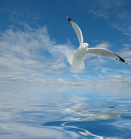 Overlooking ocean with very nice cloudy sky and its reflection with seagull flying over Stock Photo