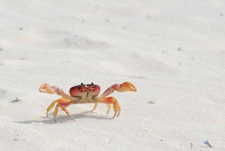 Crab exploring the beach photo