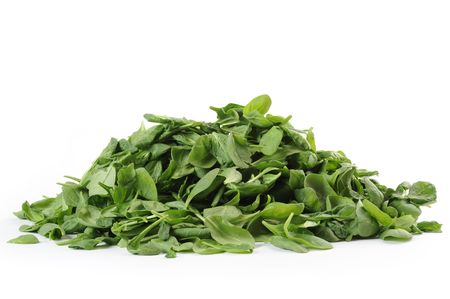 Baby Spinach studio isolated on white background photo