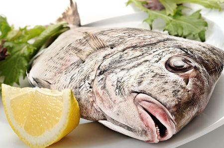 Freshly baked fish with mixed salad and lemon on white plate photo