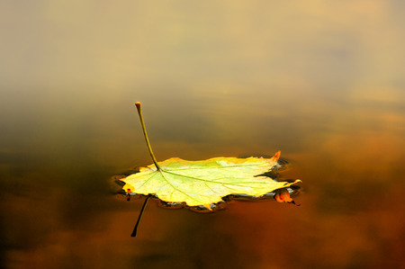 Autumn leaf floating on water with some mist and reflection photo