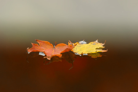 Colorful autumn leafs against soft background photo