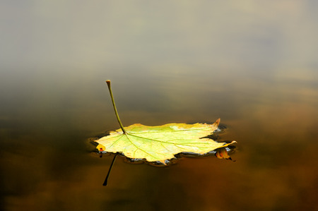 autmn: Autumn leaf floating on water with some mist and reflection