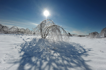 winter storm: Tree covered in ice after a major winter storm Stock Photo