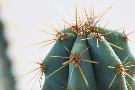 Cactus in flowerpot isolated on white background Stock Photo