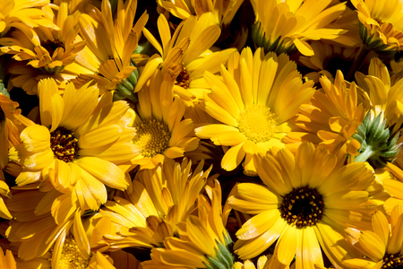 first spring flowers, sunlight