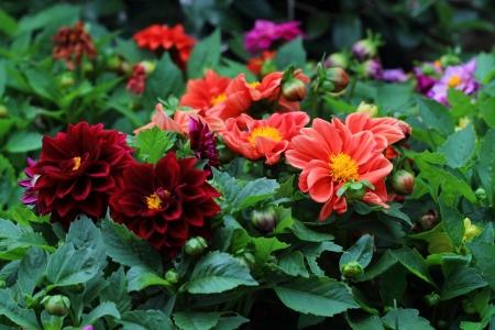 Flower Stock Photo - 18130731