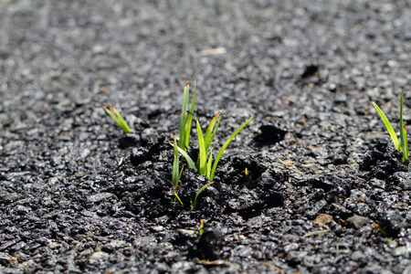 emerge: The grass that emerge from the street.
