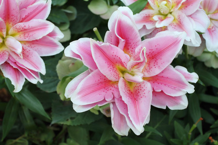 flora: pink flora