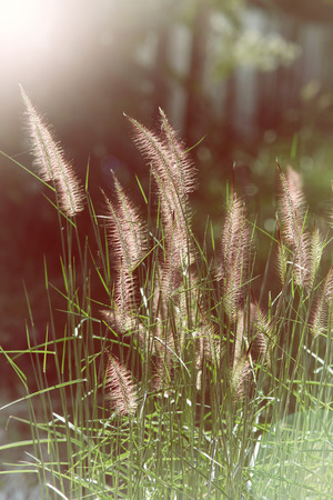 soft object: Object name:     Wild field of grass on sunset, soft sun rays, warm toning, lens
