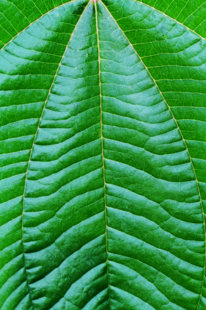 close up: close up green leaf Stock Photo