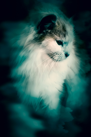 abstract cat in cloud soft and blur Banco de Imagens